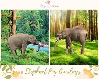 6 Elephant Overlay, Elephants overlays, Elephant Clipart, PNG Elephant, Zoo animals, Safari Animals, Photoshop Overlay, Instant Download