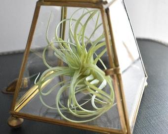 Vintage Glass and Brass Trinket Box/Geometric Glass and Brass Box/Footed/Jewelry/Display Box