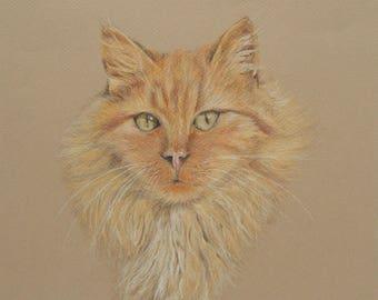Custom Cat Portrait, Cat Drawing, Custom Cat Art, Pet Drawing, Custom Pet Portrait, Cat Illustration, Cat Portrait Custom, Cat Artwork