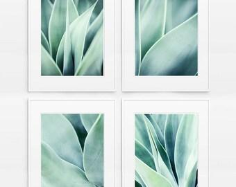 SALE Set of 4 Prints, Succulent Print, Agave plant ,Succulent Decor, succulent photograph , Aqua Blue Wall Art Mint , Botanical Photography