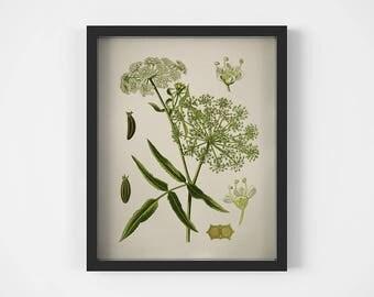 Vintage botanical illustration, Plant prints, Digital botanical print, Wall art printable, Antique botanical print, Instant download, JPG