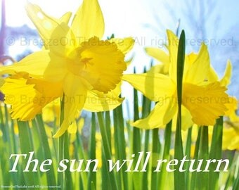Daffodil photo, sunshine print, inspirational quote, 'The sun will return,' printable download, encouragement gift, Springtime