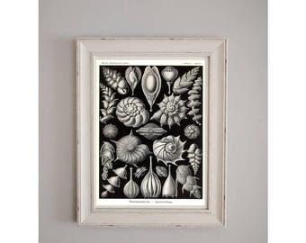 1899 Sea Shells Collection Botanical Poster // Nature Journal // Wall Art