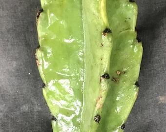 Peruvian Cereus Apple Cactus Cutting