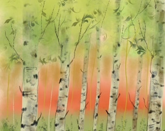 Birch Trees In The Evening