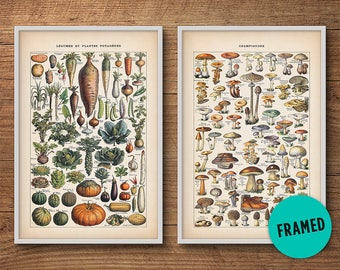 Botanical Print Set Of 2, Mushrooms And Vegetables U2013 Framed Botanical Set,  Mushroom Poster