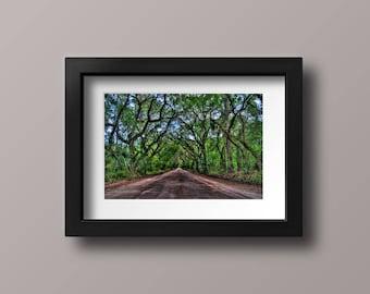 Botany Bay Road   Low Country   South Carolina   Photo Print