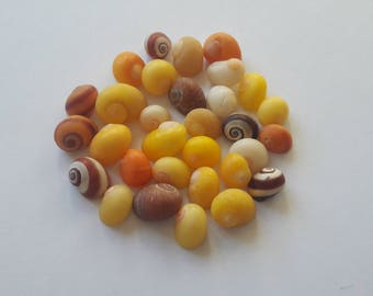 30 shells French colorful snails / french shell