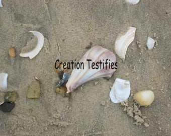 Nature photograph - Conch