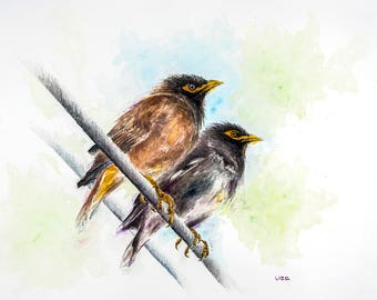 Common Myna couple Original Watercolor Painting High Quality Giclée Print canvas , home decor office nursery animal art Handmade gift PRINT