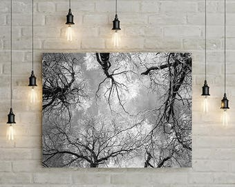 Unframed print tree trees top, black and white forest photography, photo picture image, physical printable wall art poster