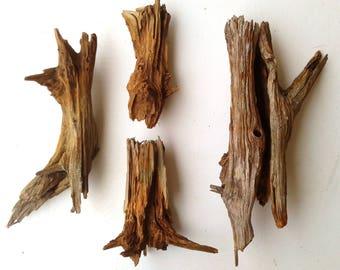 Four Cedar Stumps, FREE US SHIPPING