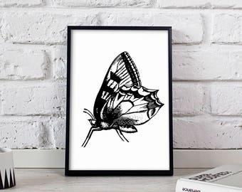 Butterfly poster, Butterfly wall art, Butterfly wall decor, Butterfly print
