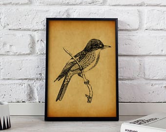 Tyrant Flycatcher Bird Vintage poster, Tyrant Flycatcher Bird wall art, Tyrant Flycatcher Bird wall decor, Tyrant Flycatcher Bird print