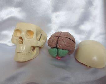 3D Anatomical Skull Removable Brain Doctor Model