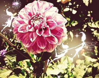 Sprites, Fairy, Fairy photo, Dahlia, Dahlia picture, Dahlia wall decor, Dahlia decor, Flower fairy.