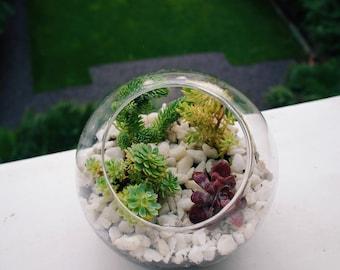 Bowl Terrarium & Succulents