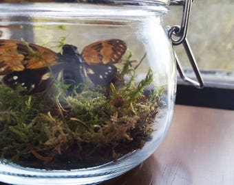 Cicada Insect Diorama | Botanist and the Bee