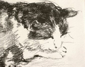 Cat sketches... for cat lovers, animal original drawing, wedding birthday gift | frame it yourself 'home sweet home' or a well chosen gift