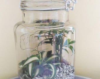 TERRARIUM JAR CLEAR TROPICAL PLANT