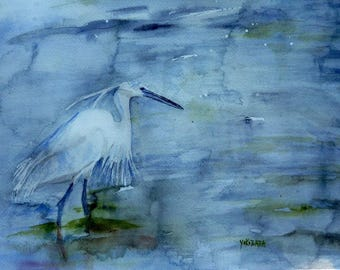 an egret, a graceful bird