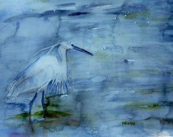 an egret, a graceful bird