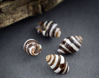 4 pcs - natural beads shells brown black • stripes • approximately 8mm x 6mm