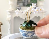 Miniature White Orchids - blue and white plant pot  - Dollhouse - Diorama - 1:12 scale