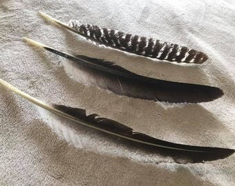 Feathers - Cruelty Free - Turkey Feather