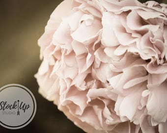 Peony, Stock Photo, Floral, Vintage, Shabby Chic, Flowers, Nature, Feminine