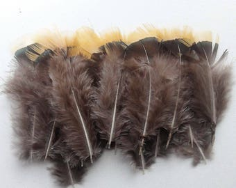 set of 20 natural feathers