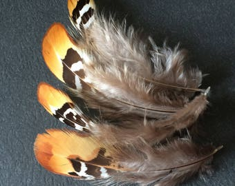 Set of 4 large white feathers, black and beige pheasant revered
