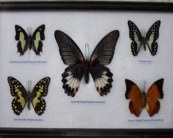REAL 5 Beautiful Butterfly Collection Frame
