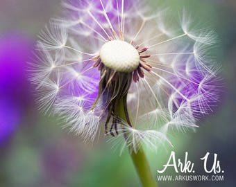 Post flower dandelion on purple and green 20 x 30 cm
