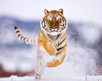 ORIGINAL design, durable and WASHABLE PLACEMAT - Siberian Tiger running in snow - classic.