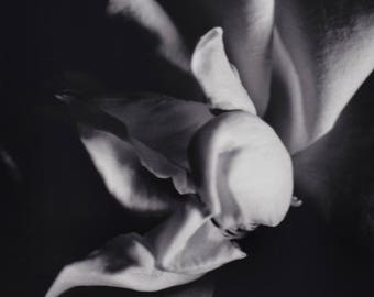 Abstract Rose Black and White Photograph