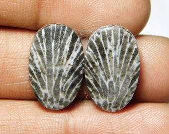 Awesome Pair ! Black Fossil coral Cabochons 100%Natural Black Fossil coral Gemstone Black Fossil coral Loose stone 18.50cts.(19x12x4)mm