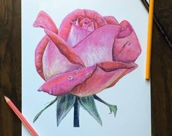 Rose Watercolor Pencil PRINT 8.5in x 11in, art gift, watercolor drawing, watercolor print, birthday gift, rose drawing, flower drawing