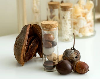 Seeds, Nuts Collection