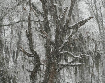 Harsh Winter, Nature Photography, Rustic Art, Snow Art, Winter Art, Old Trees