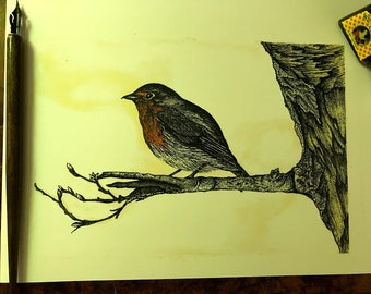 Pen and Ink Robin illustration print