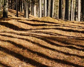Pine Forest Digital Download - computer wallpaper - Fine Art Photography from ChillyCards digital photography download