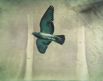 pigeon flight print