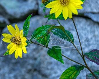 Bee Love Daisies