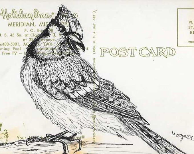 Blue Jay - Original ink drawing on vintage post card by Mr. Hooper of Nashville, Tennessee