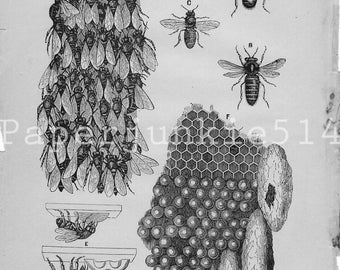 Vintage Book Plate - Bees / Hives Vintage Illustrations / Making Wax