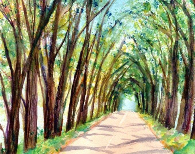 Original Watercolors, Kauai Tree Tunnel,  Tree Tunnel Paintings, Koloa Art, Kauai Fine Art, Hawaiian Watercolor,  Wall Art, watercolour