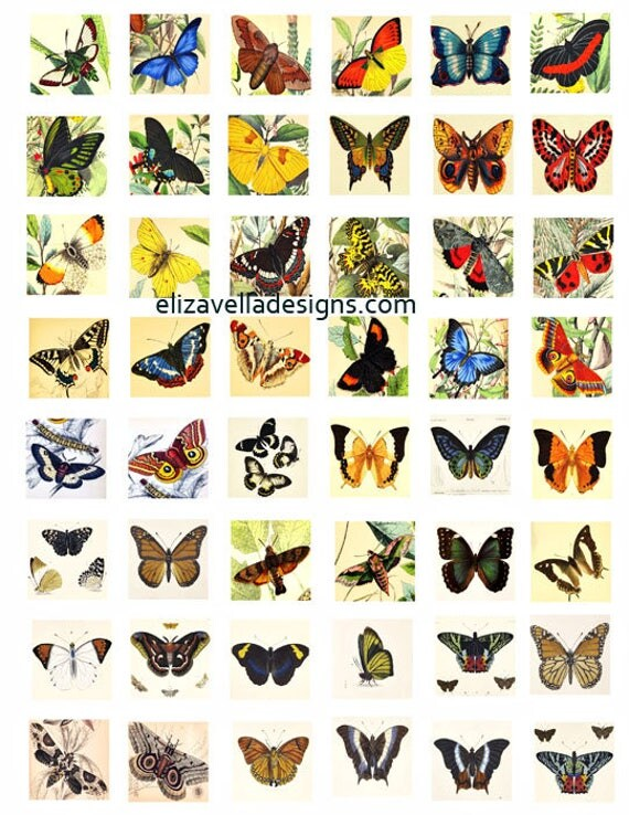 "vintage color butterfly butterflies Entomology clipart Printable art 1"" inch squares digital download collage sheet bug graphics images"