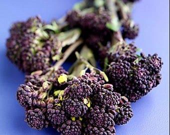 YOUR CHOICE Four Packs - Save 20% Organic Heirloom Gardening Seeds Vegetable Herb Flower