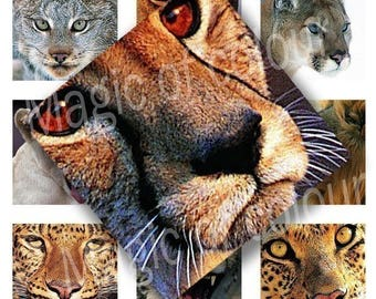 Digital Collage of Cute Wild Cats Portraits  - 63  1x1  Inch Square JPG images - Digital  Collage Sheet